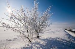 Vinterpanelljus Royaltyfri Fotografi