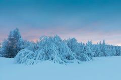 Vinterpanoramalandskapet med skogen, träd täckte snö och soluppgång vintermorgon av en ny dag bakgrundsjulen stänger upp röd tid royaltyfri fotografi