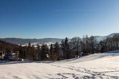 Vinterpanoramalandskapet med skogen, tr?d t?ckte sn? och soluppg?ng winterly morgon av en ny dag Vinterlandskap med solnedg?ng arkivbild