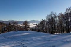 Vinterpanoramalandskapet med skogen, tr?d t?ckte sn? och soluppg?ng winterly morgon av en ny dag Vinterlandskap med solnedg?ng royaltyfri foto