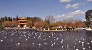 Vinterparadis av fåglar royaltyfri bild
