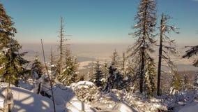 Vinterpinjeskog på en solig dag royaltyfri foto