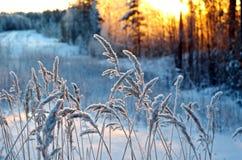 Vinterplats royaltyfri fotografi