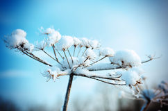 Vinterplats. Frozenned blomma arkivbild