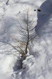 Vinterplats i berg Ett kalt litet träd på snö Royaltyfria Bilder