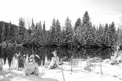 Vinterplats utomlands en sjö fotografering för bildbyråer