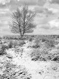 Vinterplatsen med det skalliga trädet i snö täckte hed-land, Regte Heide, Goirle, Nederländerna royaltyfria foton