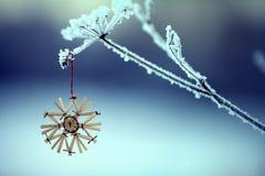 Vinterris och gräs som täckas med frost och snö royaltyfri fotografi