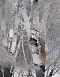 Vinterrost Arkivfoto