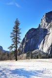 Vintersäsong i den Yosemite nationalparken Royaltyfri Bild