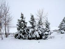 Vintersaga Fotografering för Bildbyråer