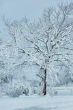 Vintersaga som sköter snöstormnaturskönhet Arkivfoto