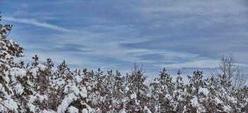 Vintersaga som sköter snöstormnaturskönhet Arkivbild
