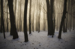 Vintersagalandskap i skog på juldag Royaltyfri Fotografi