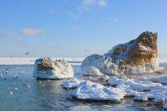 Vinterseascape med fåglarna Royaltyfri Foto