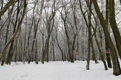 Vintersikt av skogen arkivfoto