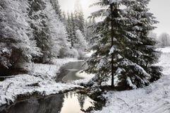 Vinterskog Royaltyfri Foto