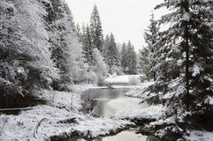 Vinterskog Royaltyfria Bilder