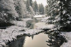 Vinterskog Royaltyfri Fotografi