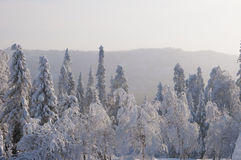 Vinterskog Fotografering för Bildbyråer