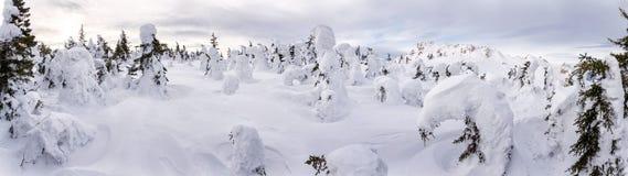 Vinterskog efter snowfall arkivbild