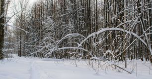 Vinterskog efter tungt snöfall fotografering för bildbyråer