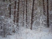 Vinterskog efter tungt snöfall, Novosibirsk, Ryssland arkivfoton
