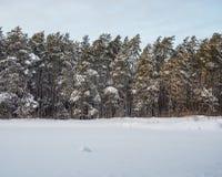 Vinterskog efter tungt snöfall, Novosibirsk, Ryssland arkivfoto