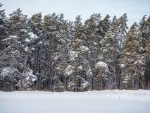 Vinterskog efter tungt snöfall, Novosibirsk, Ryssland fotografering för bildbyråer