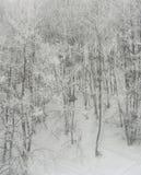 Vinterskog för högt berg Arkivfoto