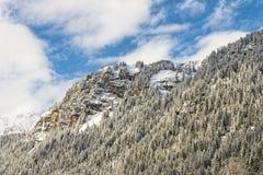 Vinterskog i berg Arkivbild