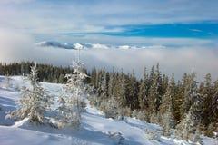 Vinterskog i berg Royaltyfri Bild