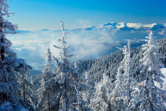 Vinterskog i bergen Royaltyfria Foton