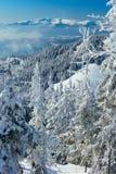 Vinterskog i bergen Fotografering för Bildbyråer