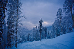 Vinterskog i bergen Arkivbild