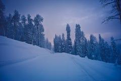 Vinterskog i bergen Arkivfoto