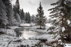 Vinterskog i Carpathians Royaltyfria Foton