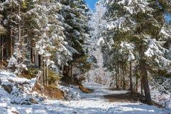 Vinterskog i Carpathians Arkivbilder