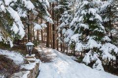 Vinterskog i Carpathians Royaltyfri Fotografi