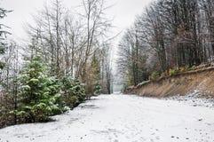 Vinterskog i Carpathians Royaltyfri Foto