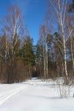 Vinterskog i en solig dag Royaltyfria Bilder