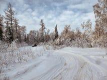 Vinterskog i Sibirien arkivbild