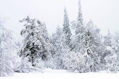 Vinterskog i snö arkivbilder
