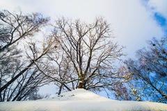 Vinterskog i snö royaltyfri foto