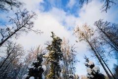 Vinterskog i snö Arkivfoton