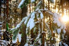 Vinterskog i soligt väder Fotografering för Bildbyråer