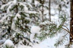 Vinterskog i soligt väder Arkivbild