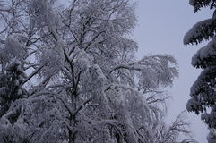 Vinterskog i Vologda Arkivbilder