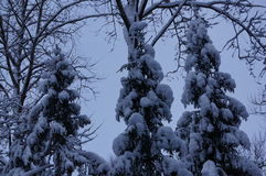 Vinterskog i Vologda royaltyfri foto