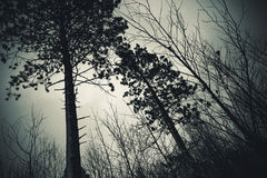 Vinterskog i Wisconsin Royaltyfri Foto